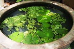 Lotus verlässt Teich Lizenzfreie Stockfotos