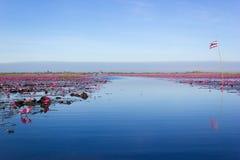 Lotus vermelho Fotografia de Stock