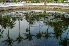 Lotus-vijver in Royal Palace in Luang Prabang, Laos, Azi? royalty-vrije stock foto