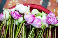 Lotus voor boeddhisme stock foto's