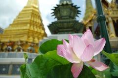 Lotus w Tajlandia świątyni w Bangkok Obraz Stock