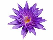 Lotus w ten sposób śliczny zdjęcie stock