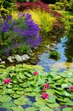 Lotus Water Garden with Lavender Royalty Free Stock Photo