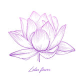 Lotus water lily vector beautiful flower colorful pink purple so Royalty Free Stock Image