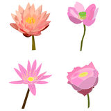 Lotus and water lily vector set Stock Images