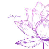 Lotus water lily waterlily vector beautiful flower colorful pink Stock Photo