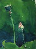 Lotus in watercolor Stock Images
