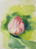 Lotus in watercolor Stock Photo
