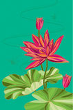 Lotus. Waterlily. Vector. Illustration Stock Photos