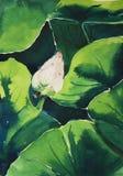 Lotus in waterverf Royalty-vrije Stock Fotografie