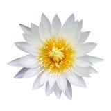 Lotus-Weinlese Stockfotografie