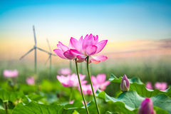 Lotus and wind turbine Royalty Free Stock Photos