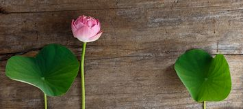 Lotus on wood. Beautiful pink lotus flower and leaves on wood background Stock Photos
