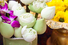 Lotus for worship buddha statue Stock Images