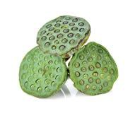 Lotus-zaden stock foto's