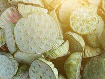 Lotus-zaden royalty-vrije stock afbeeldingen