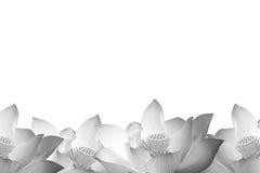 Lotus in zwart-wit Stock Foto