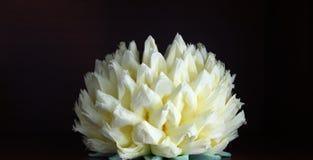 lotusbloem stock foto