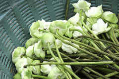 lotusbloem Royalty-vrije Stock Fotografie