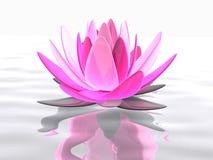 lotusbloem bloem Stock Afbeeldingen