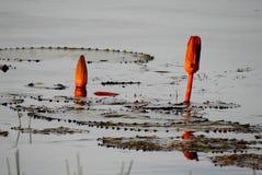 Lotusbloem twee op water stock fotografie