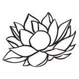 lotusblomma Arkivbilder