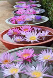 lotusblomma Fotografering för Bildbyråer
