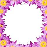Lotusblomma eller näckros för isolatfyrkantram på vit bakgrund arkivfoto