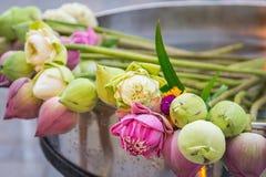lotusblomma för dyrkan buddha Arkivbild