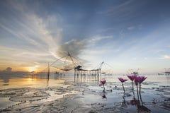 Lotusblomma i laken Fotografering för Bildbyråer