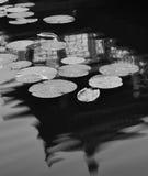 Lotusblomma i laken royaltyfri fotografi