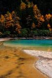 Lotusblomma Lake arkivfoton