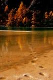 Lotusblomma Lake royaltyfria bilder