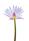 Lotusblommablommaisolate på white Arkivfoton