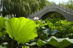 lotusblommadamm Royaltyfri Fotografi