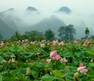 Lotusblommadamm Arkivbilder