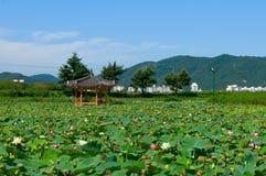 lotusblommadamm Fotografering för Bildbyråer