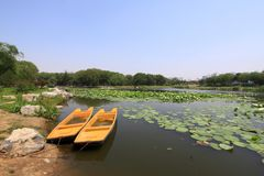 Lotusblommadammlandskap i en park Arkivbilder