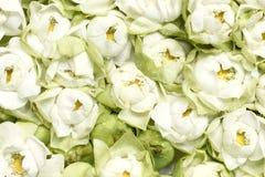 Lotusblommanäckros Arkivfoto