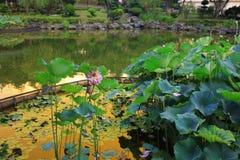 lotusblomman på Fanling Hong Lok Park hk arkivfoto