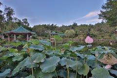 lotusblomman på Fanling Hong Lok Park hk royaltyfri bild