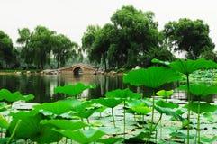 lotusblommapark royaltyfria foton