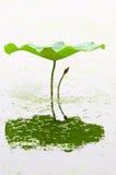 Lotusblommar slår ut och blad arkivbild