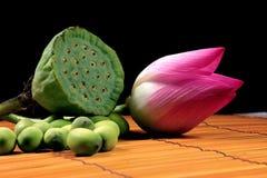 lotusblommarotting Royaltyfria Foton