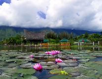 Lotusblommor och berg. Arkivbild