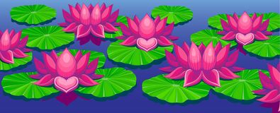 Lotuses Royalty Free Stock Photo