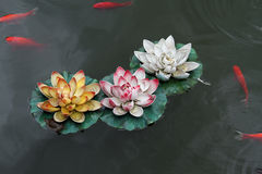 Lotuses and fish Stock Images