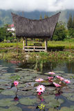 Lotuses and house Stock Photos