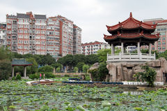 Lotuses in Quanzhou Royalty Free Stock Images