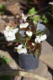 Loucura da cor e flores agradáveis Ajardine no jardim nos plenos verões, em um dayn ensolarado Foto de Stock